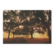 Morning Walk Photographic Canvas, , large