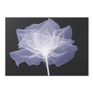 X-Ray Rose Wall Art, , large