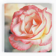 Pink Petal Rose With Glitter Printed Canvas, , large