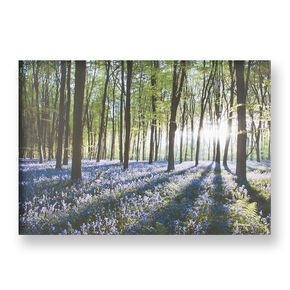 Bluebell Landschap Printed Canvas, , large