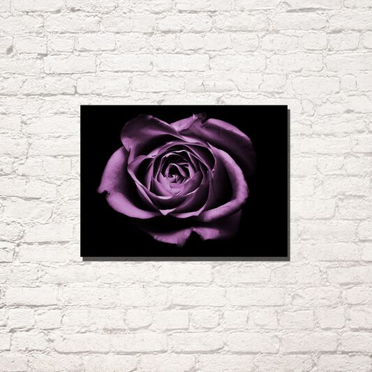 Drama Rose Printed Canvas, , large