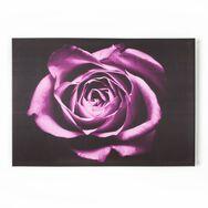 Rose Drame-Toile imprimée, , large