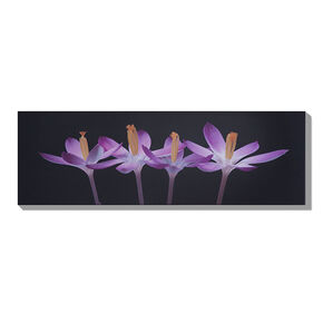 Crocus Embrace Lacquer Art, , large