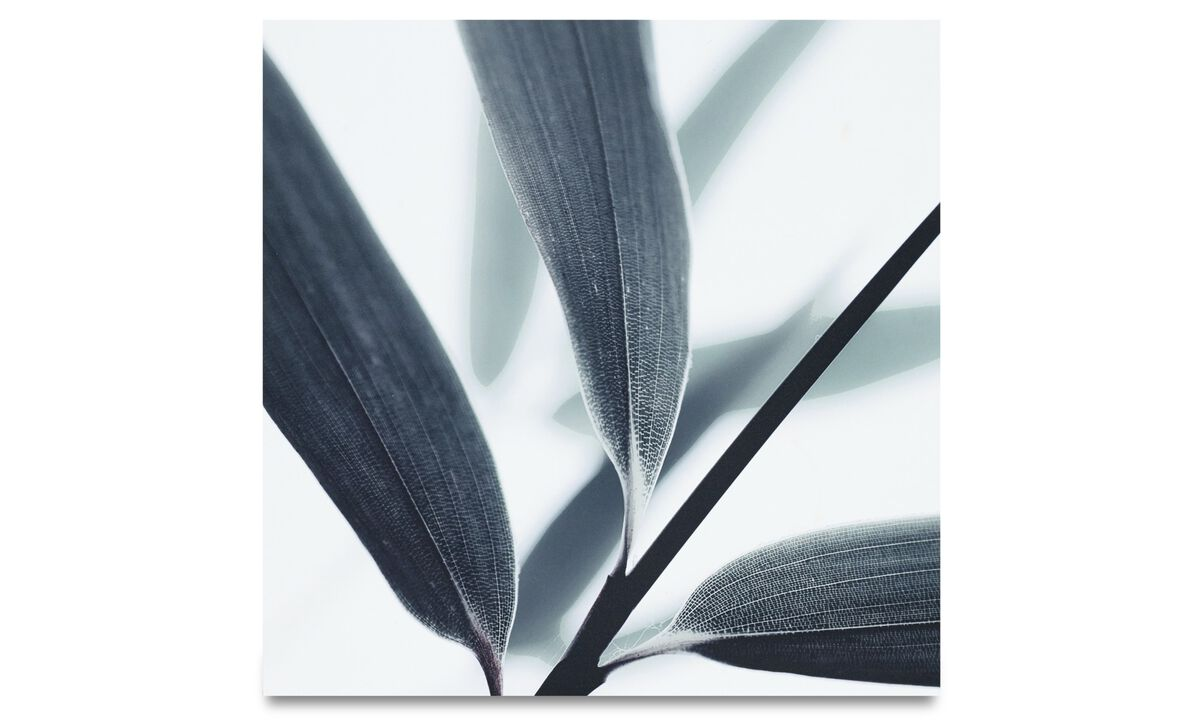 Paintings - Botanic metal print, Olive leaves - Metal