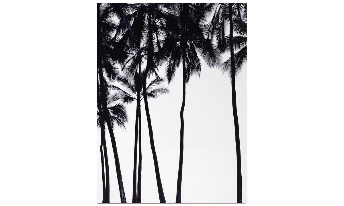 Galleri - Palm sky metal print - Metal