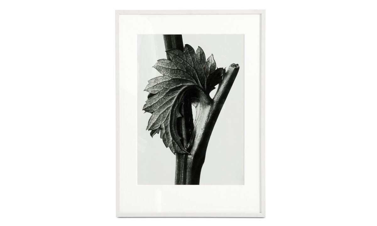 Galerie - Canadian Burnet obraz v rámu - Černá - Dřevo