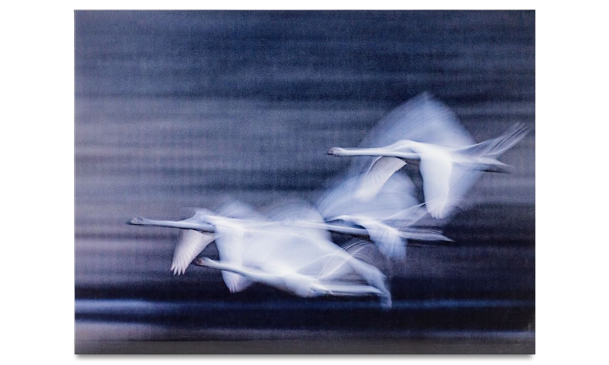 Gallery - Swans glass art - Glass
