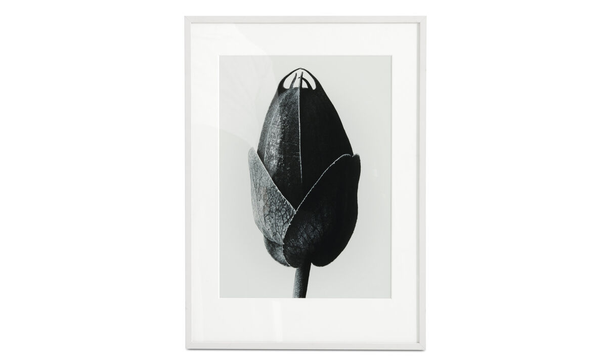 Galerie - Passion Flower obraz v rámu - Černá - Dřevo