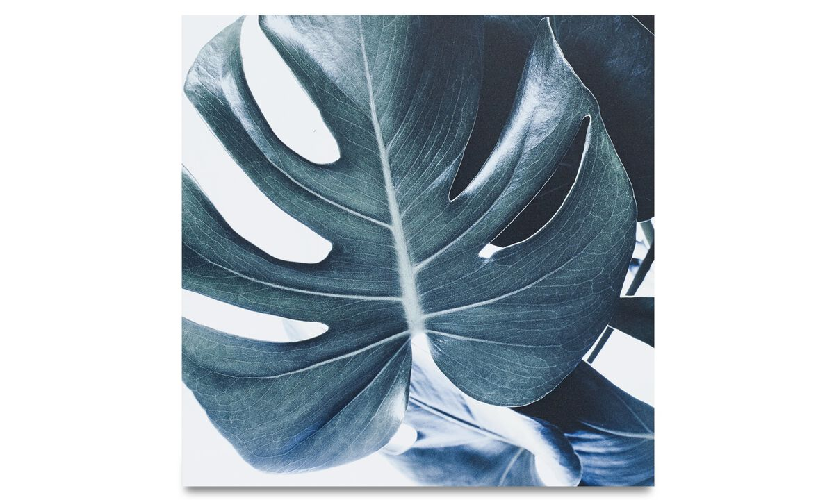 Paintings - Botanic metal print, Monstrea - Metal